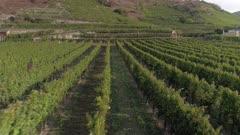 Vineyards Aerial Flyover