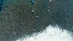 Surfers in the Ocean Catching Waves from a Bird's Eye View