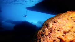 Seascape in cave Blue Room at the coast of Caribbean Sea / Curacao with Banded Coral Shrimp  and diver