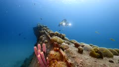 "Ship wreck ""Black Sand Wreck"" and diver in coral reef in Caribbean Sea / Curacao with fish, coral and sponge"