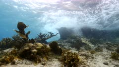 Seascape in shallow water of coral reef in Caribbean Sea / Curacao with fish, Elkhorn Coral and Sea Fan