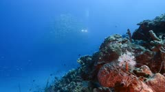 Seascape in turquoise water of coral reef in Caribbean Sea / Curacao with Feather Duster Worm and Bait Ball