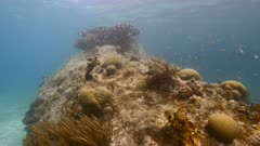 Seascape in shallow water of coral reef in Caribbean Sea / Curacao with Elkhorn Coral, fish, coral and sponge