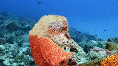 Seascape of coral reef in Caribbean Sea / Curacao with fish, coral and Feather Duster Worm in Sponge