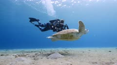 Green Sea Turtle and Diver swim in shallow water of coral reef in Caribbean Sea / Curacao