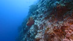 Seascape of drop off in coral reef of Caribbean Sea / Curacao with fish, coral and sponge