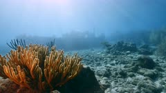 """Ship wreck """"Tugboat"""" in coral reef of Caribbean sea with soft coral and sunbeams"""