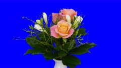 Time-lapse of rotating and growing rose bouquet 1x6 in 5K Animation format with ALPHA transparency channel isolated on blue chroma keyed background