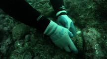 Abalone Fisherman Puts Back On The Rocks An Abalone