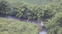 Overlooking River, White Water, Lined With Palms, Vegetation