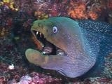 Moray Eel Portrait
