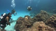Divers Photograph Cuttlefish