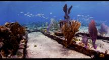 POV Travel Over Top Of Shallow Wreck With Fish And Invertebrates