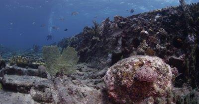 Diver Swims Over Sugar Wreck,Bahamas