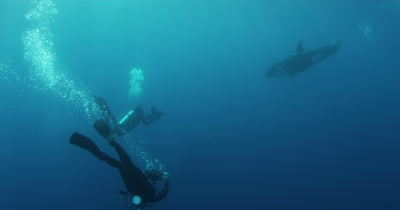 Divers Swim With Killer Whales
