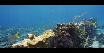 Fish swimming at a shipwreck in the Bahamas