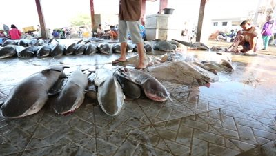 Sharks at fish market