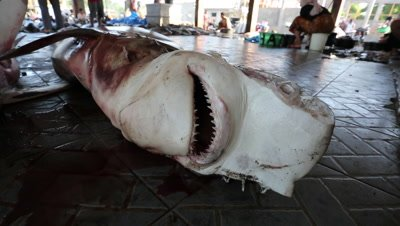 Hammerhead shark with eyes cut off at fish market