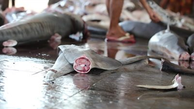 Shark fins at fish market