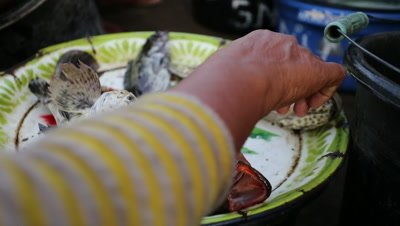 Live fish on a plate at fish market