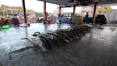 Large shark added to pile at fish market