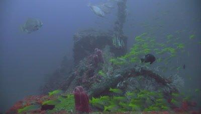 Japanese WW II shipwreck