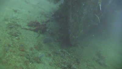 Reveal of Japanese WWII shipwreck