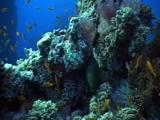Camera Approach To Moray Eel At The Coral Pillar