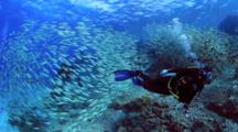 Large School Of Goatfish And Divers