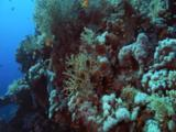 Travel Over Densely Populated Coral Reef