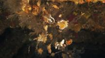 View Inside Wreck, Close Up Of Hydroids