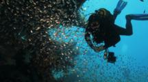 Diver Enters Wreck Into Large School Of Sweepers