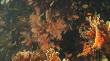 Coral Reef Scenic With Small Fish And Fire Coral