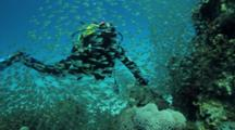 Diver On Reef With Sweepers Swimming In Synchrony