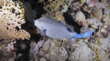 Box Fish Near Bottom Is Wary Of Camera