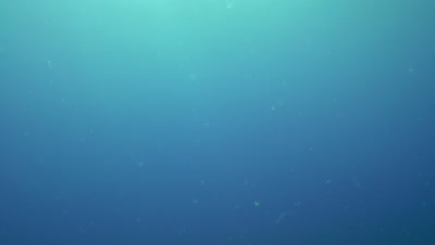 Particles floating in blue water