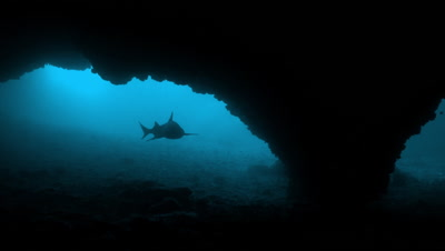 White tip silhouette from inside cave