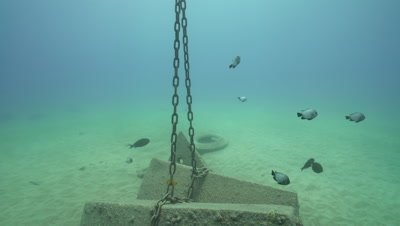 Damsels on cement and chain mooring, sandy bottom
