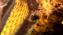 Tropical Fish & Reef - Queen Trigger Fish (Sleeping)