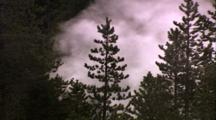 Thermal Activity, Steam Rising Behind Pine Trees, Mammoth Hot Springs Area