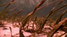 Shoreline Life - Shallow Water Sea Grasses