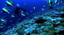 Divers - Diver Filming Moorish Idol School Over Coral