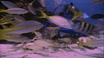 Diver Feeds Moray Eel
