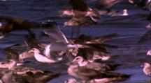 Gulls On Shore