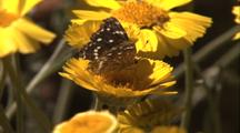 Yellow Daisy Flowers With Butterfly
