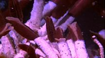 Tube Worms With Hot Water Ripples