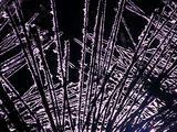 Winter Scenics - Silhouette Snowy Pine Needles, Black Background