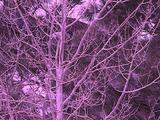 Winter Scenics - Pan Right Across Bare Aspen Trees
