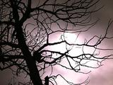 Winter Scenics - Hazy, Foggy Sun Behind Clouds And Bare Branches