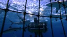 Oceanic Technology -  Flying Shark Cage Camera Set Up Underwater